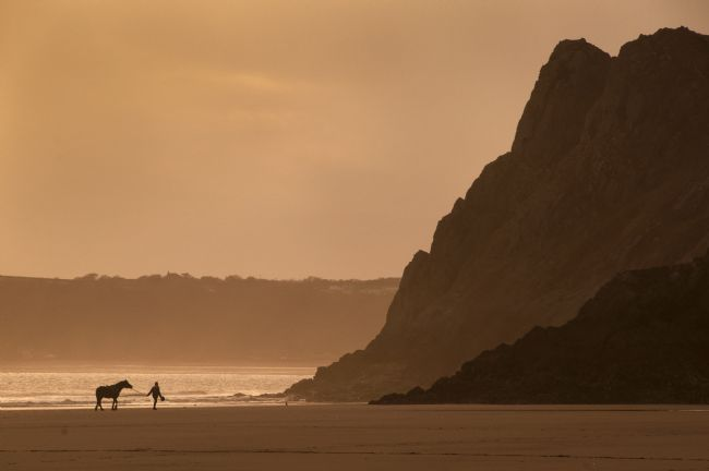 Nigel Forster | Horse in Three Cliffs Bay