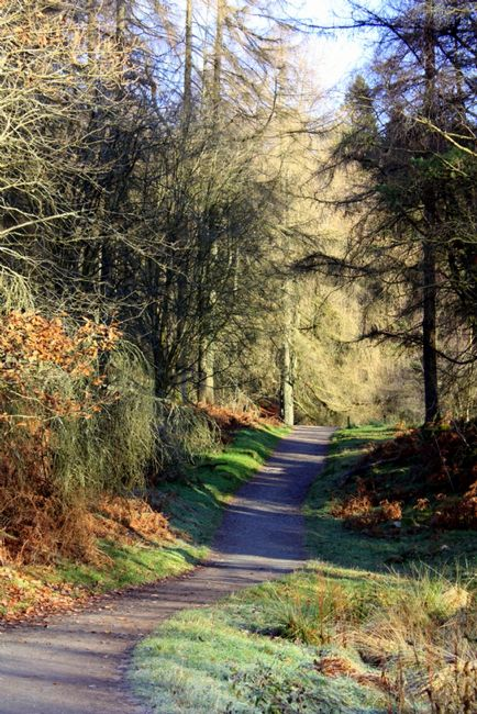 Jackie  Simmons | Woodland Walk