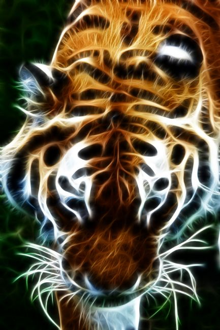 Howard Corlett | Tiger, tiger, burning bright