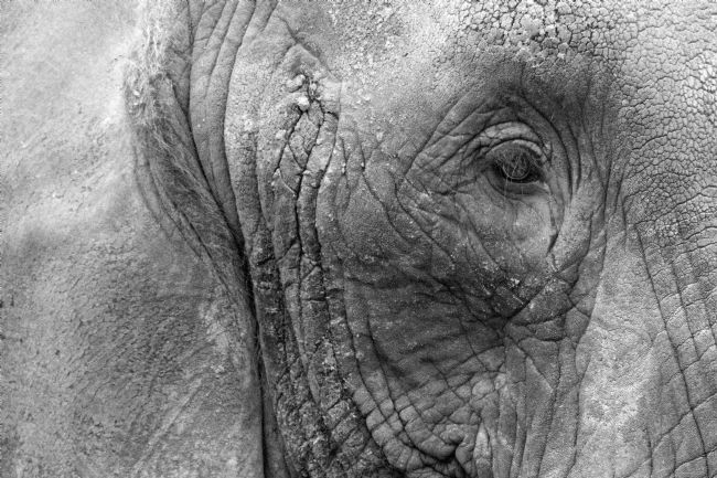Howard Corlett | Elephant head