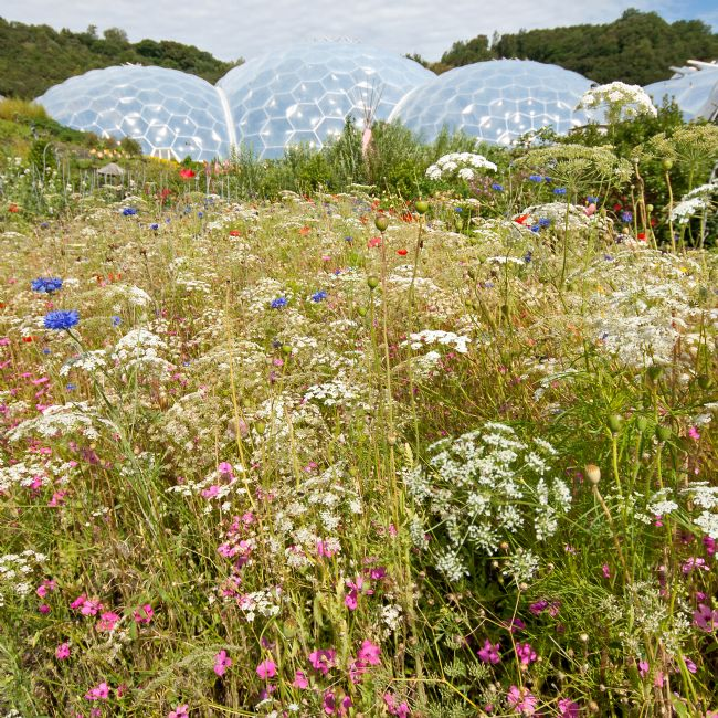 Howard Corlett | Eden Project Wilderness