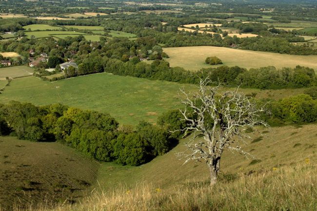 Howard Corlett | South Downs Panorama