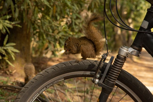 Carlos Henrique Pinto | squirrel on bike