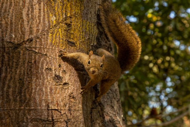 Carlos Henrique Pinto | squirrel in the tree