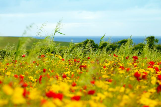 Terri Waters | Seaside Flower Field