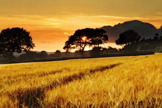 Terri Waters | Fields Of Gold Sunset