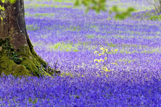 Terri Waters | Bluebells