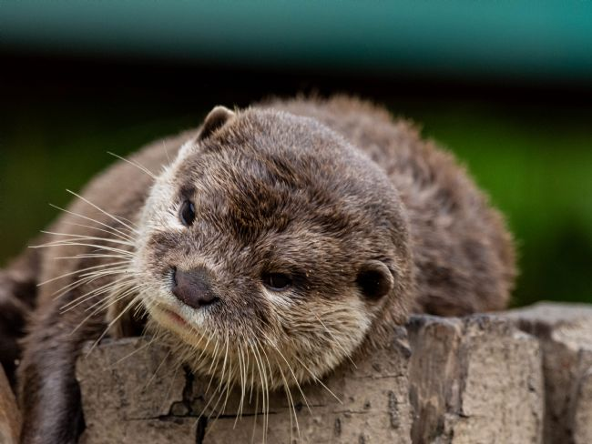 Mark Ingleby | Otter