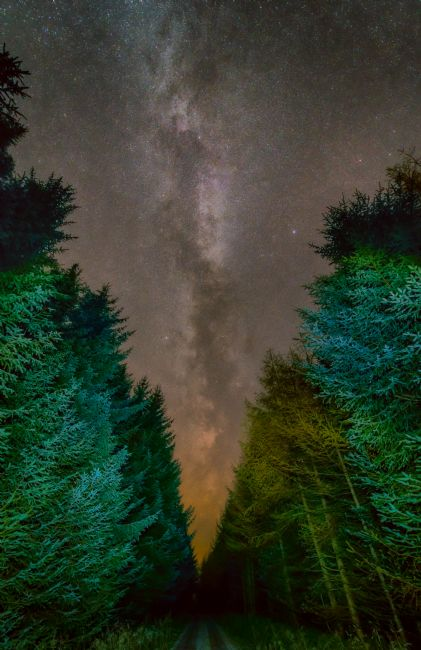 Mark Ingleby | Milky Way Over The Forest