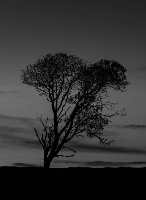 Mark Ingleby | The Tree
