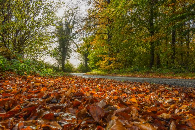 Mark Ingleby | Autumnal Woodland