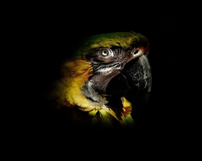 richard sayer | Parrot Portrait