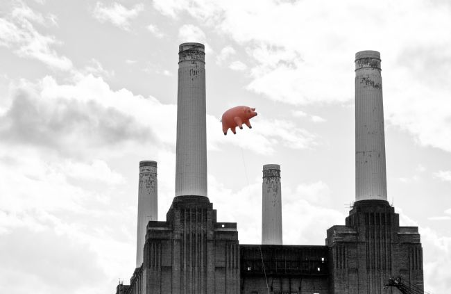 Dawn OConnor | Pink Floyds Pig at Battersea Power Station