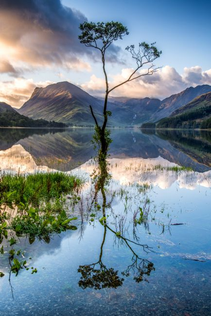 George Robertson | Buttermere Tree