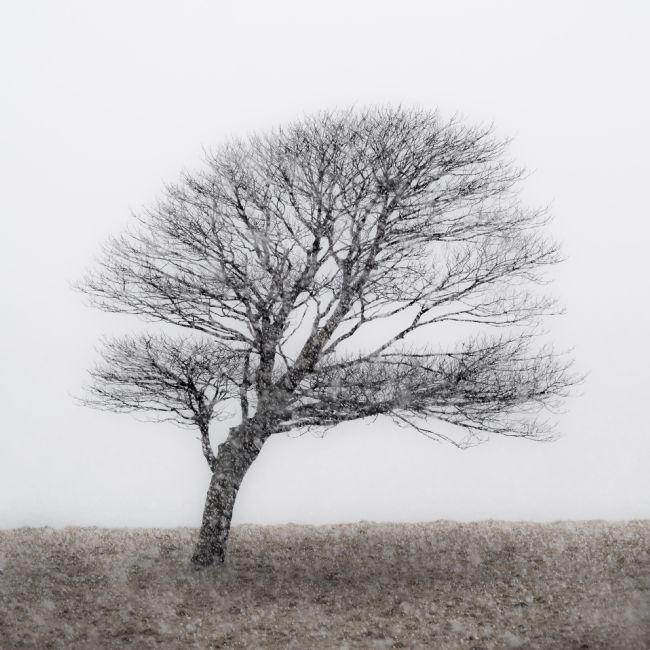 George Robertson | Lone Tree in snow storm