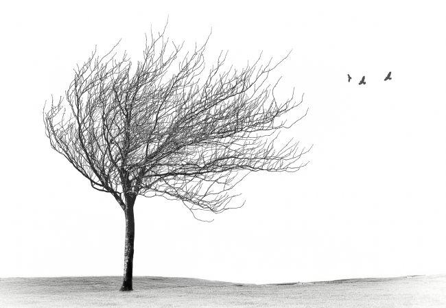 Adam Walker | Windswept tree