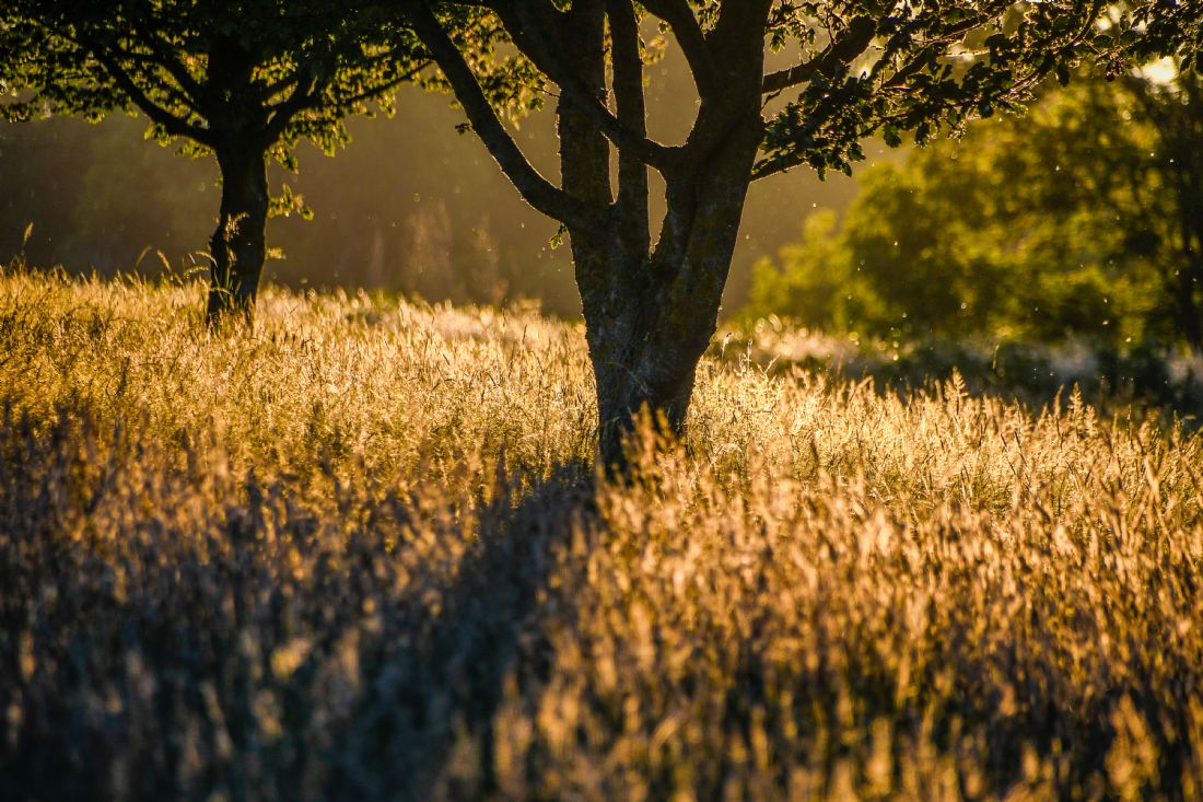 Mike Carroll | Golden Hour at Ash Valley