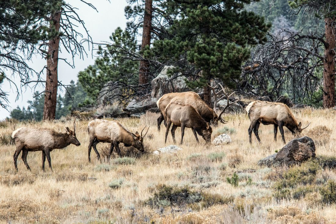 Mike Carroll | Elk Migration