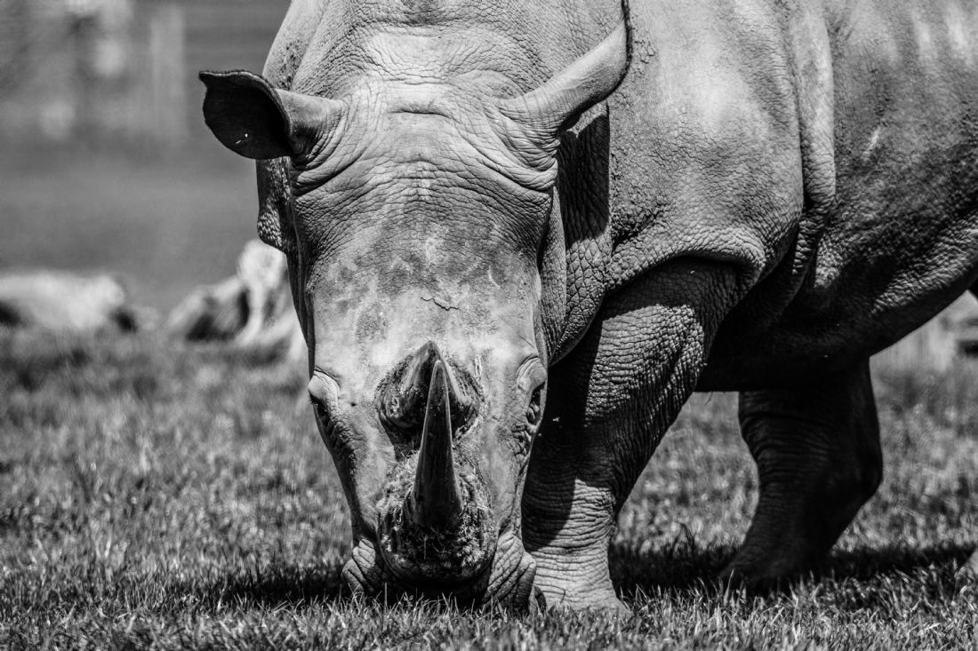 Mike Carroll | Rhino on alert