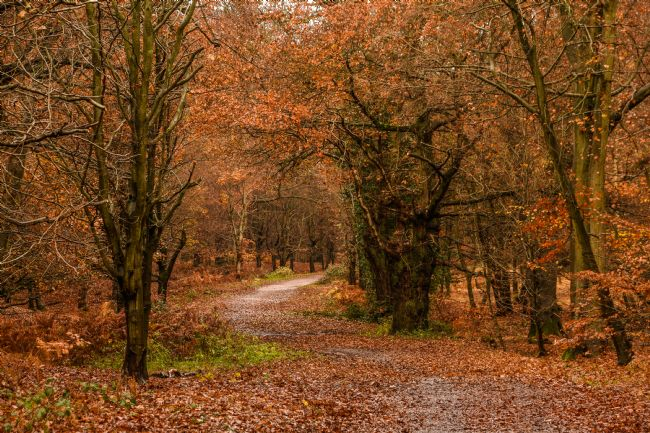 Mike Carroll | Autumnal Forest Walk (1)