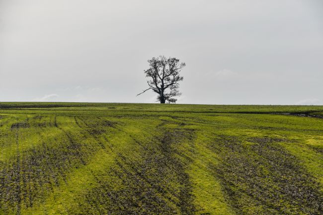 Mike Carroll | Lone Tree (1)