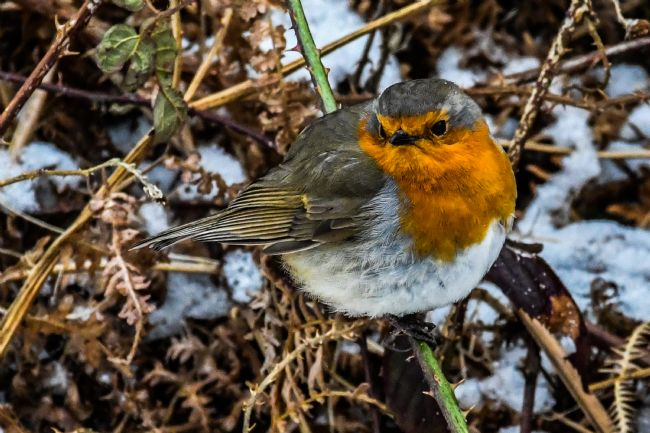 Mike Carroll | Robin in winter