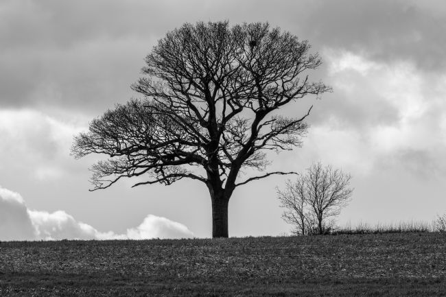 Mike Carroll | Wintry tree