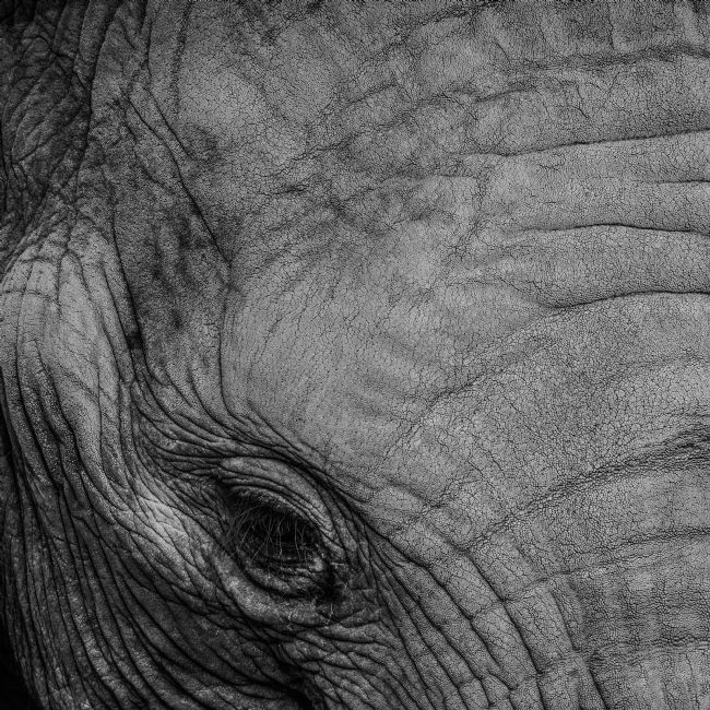 Mike Carroll | Elephants eye