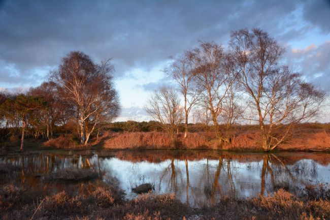 Mike Carroll | New Forest Sunset
