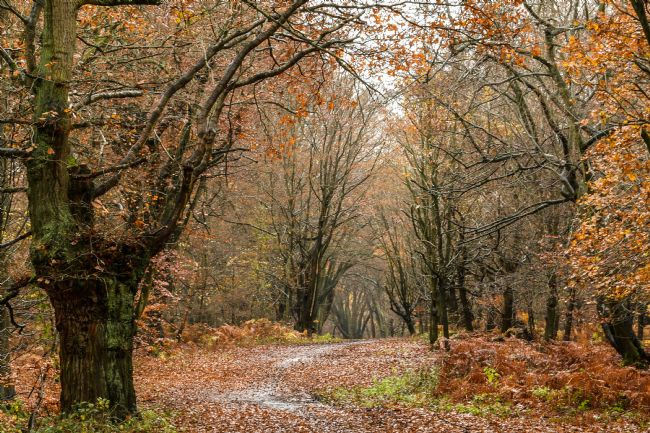 Mike Carroll | Epping Forest Autumn (2)