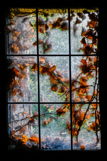 Mike Carroll | Autumn Leaves through a Window