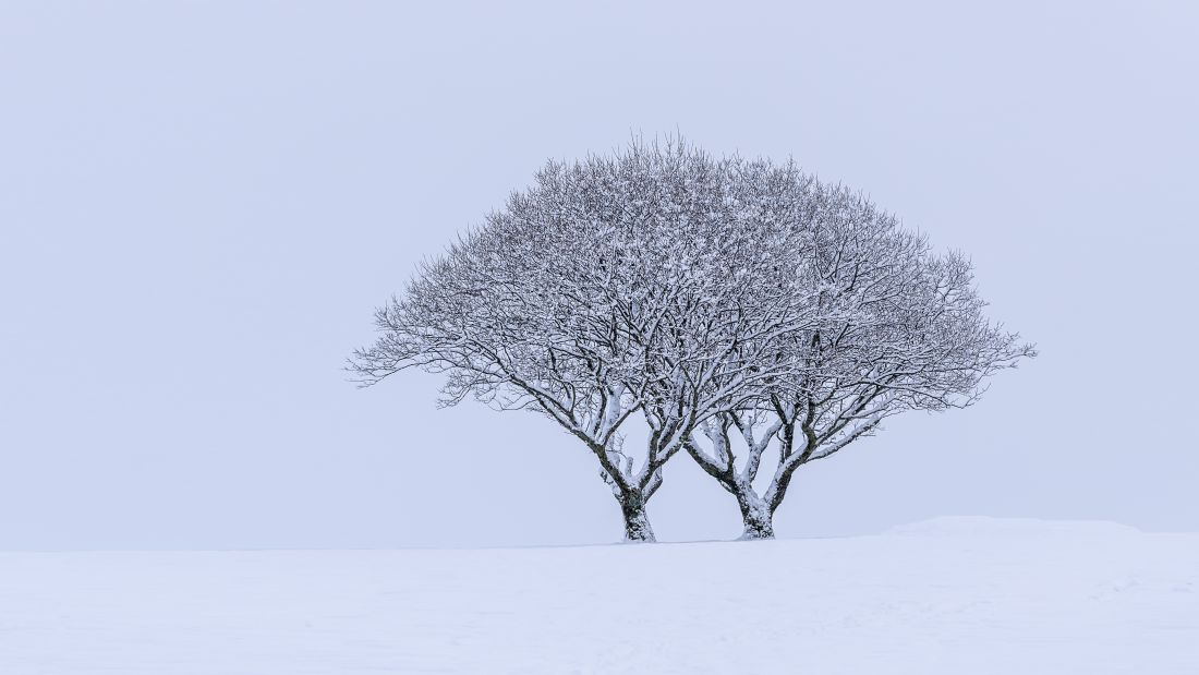 Mark Stinchon | Snowy Lone Tree