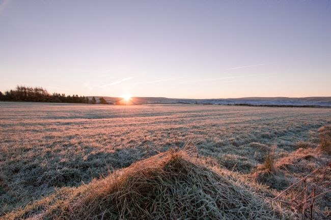 Mark Stinchon | Morning Sunrise over field