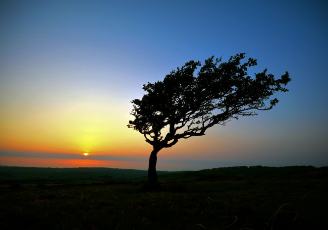 Graham Carnduff-Youngg | Windswept Tree on Exmoor