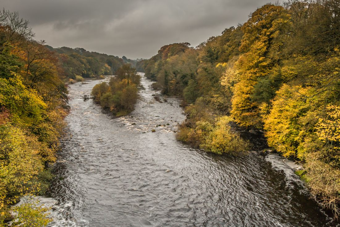 Richard Laidler | Autumn on the River Tees at Winston