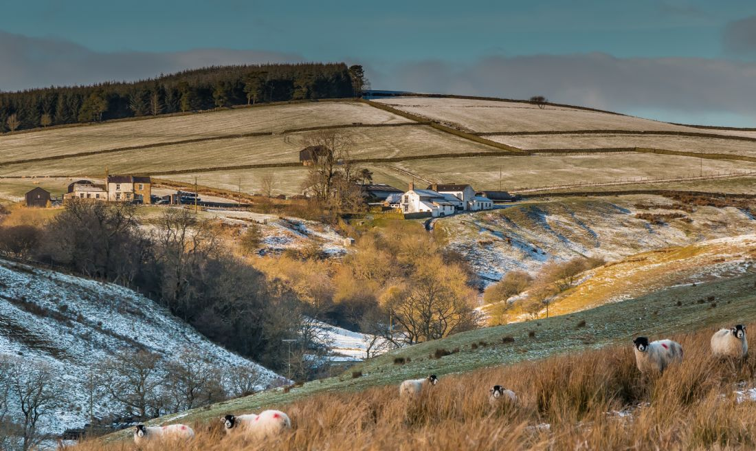 Richard Laidler | Winter at Birch Bush Farm, Teesdale