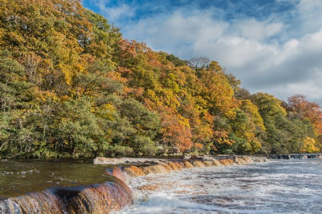 Richard Laidler | Autumn on the River Tees at Whorlton, Teesdale