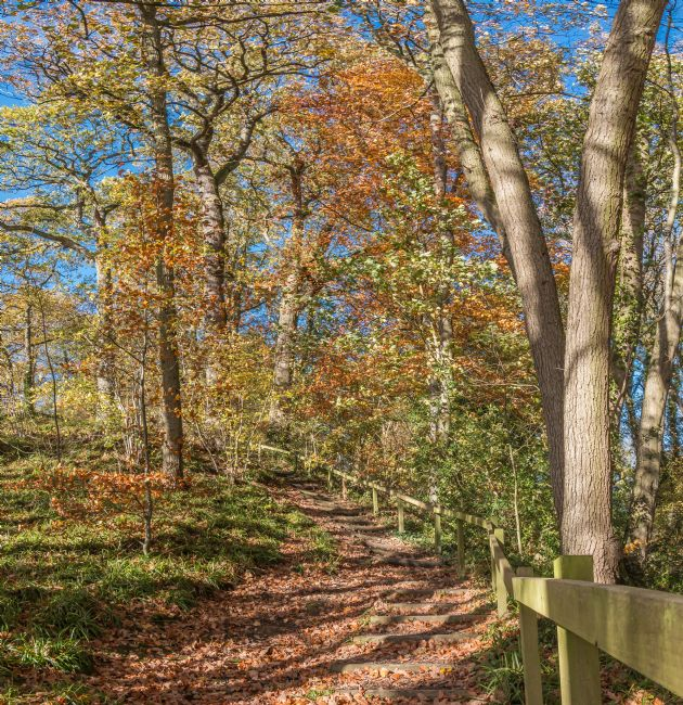 Richard Laidler | Stairway Through The Woods in Autumn
