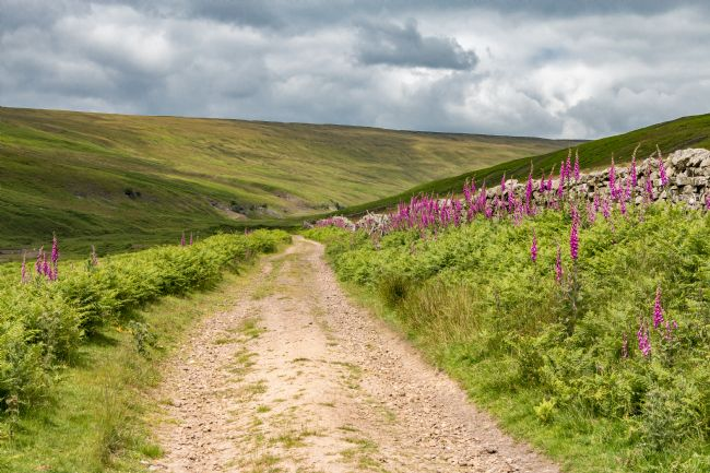 Richard Laidler | Track to Hudeshope Head, Teesdale