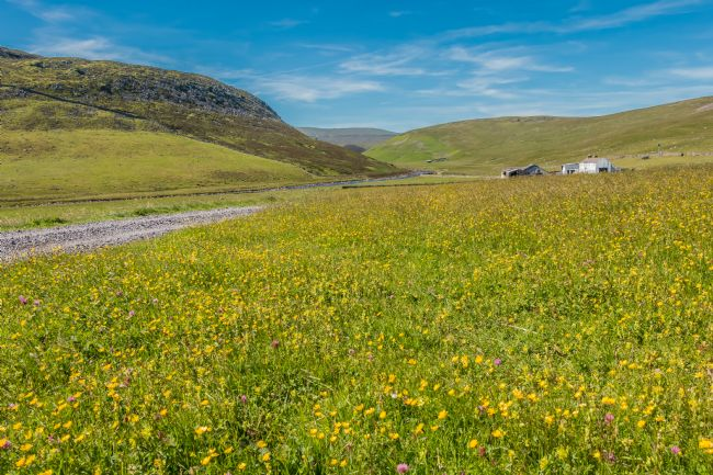 Richard Laidler | Flowering Hay Meadows at Widdybank Farm, Upper Teesdale