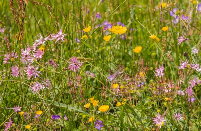 Richard Laidler | Roadside Wild Flowers