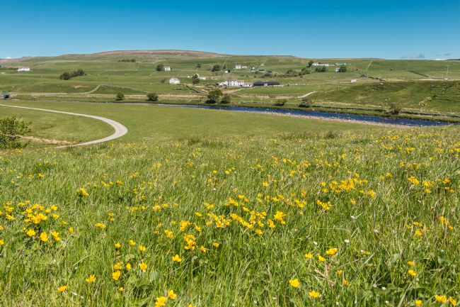 Richard Laidler | Spring Meadow at Cronkley, Upper Teesdale