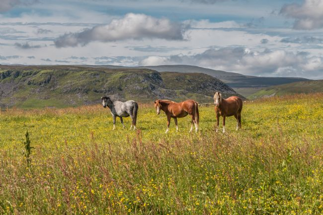 Richard Laidler | Three Equine Amigos