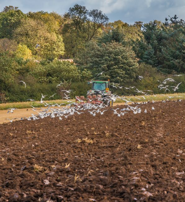 Richard Laidler | Autumn Ploughing