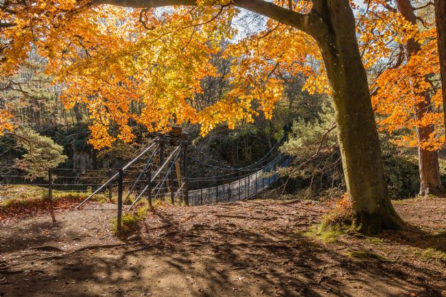 Richard Laidler | Autumn Woodland at Wynch Bridge, Teesdale