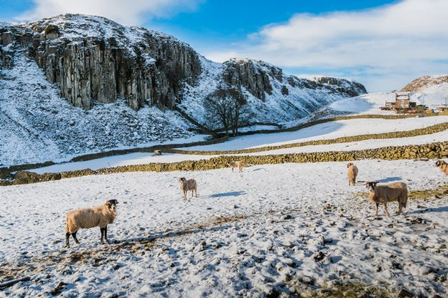 Richard Laidler | Winter at Holwick Scar, Upper Teesdale