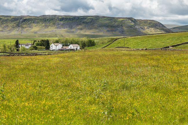 Richard Laidler | Hay Meadow in Flower at Langdon Beck, Teesdale