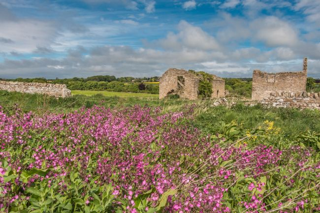 Richard Laidler | Ruined Barns and Red Campion