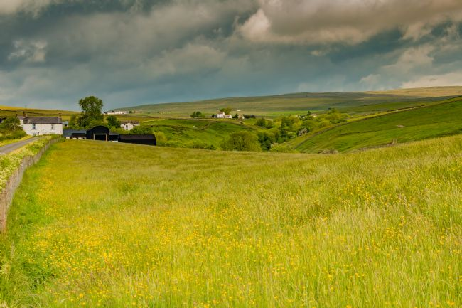 Richard Laidler | Teesdale Hay Meadows