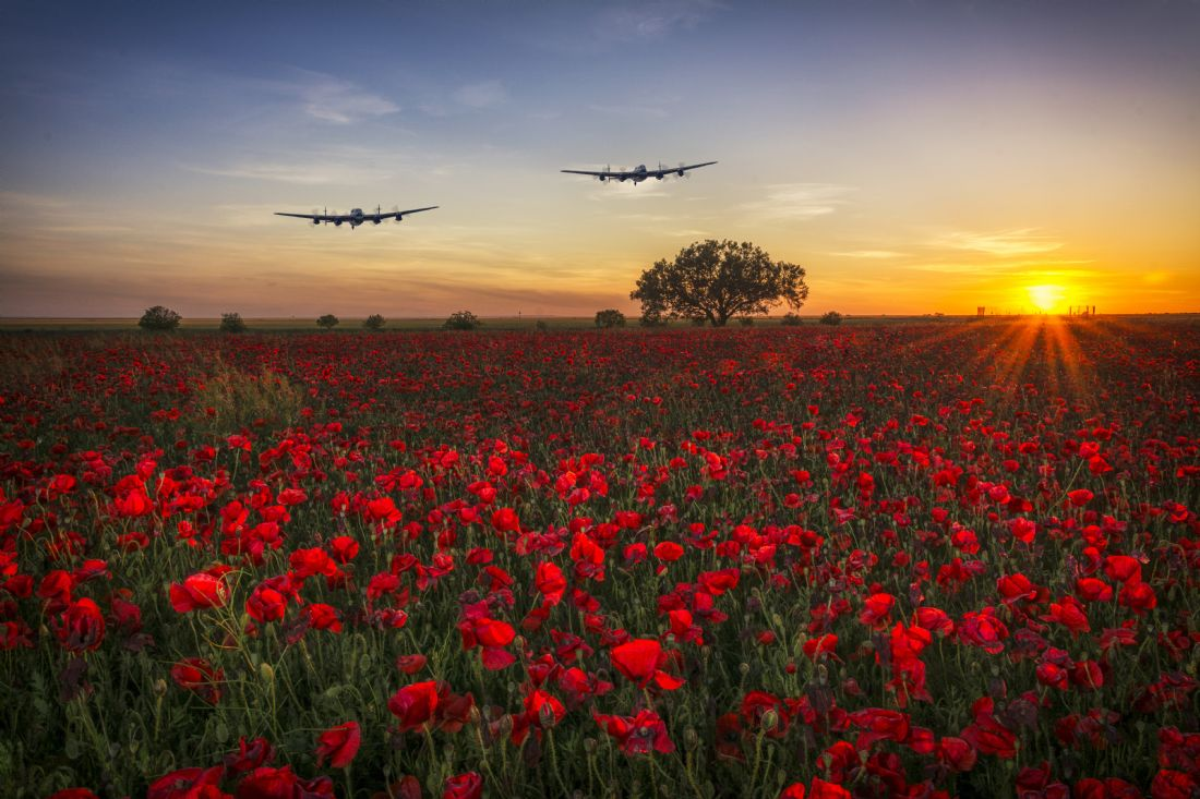 Tom Dolezal | Lancaster over the poppies